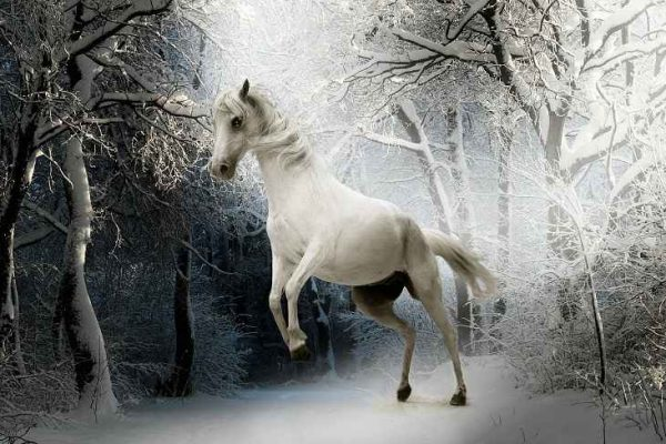 color white horse